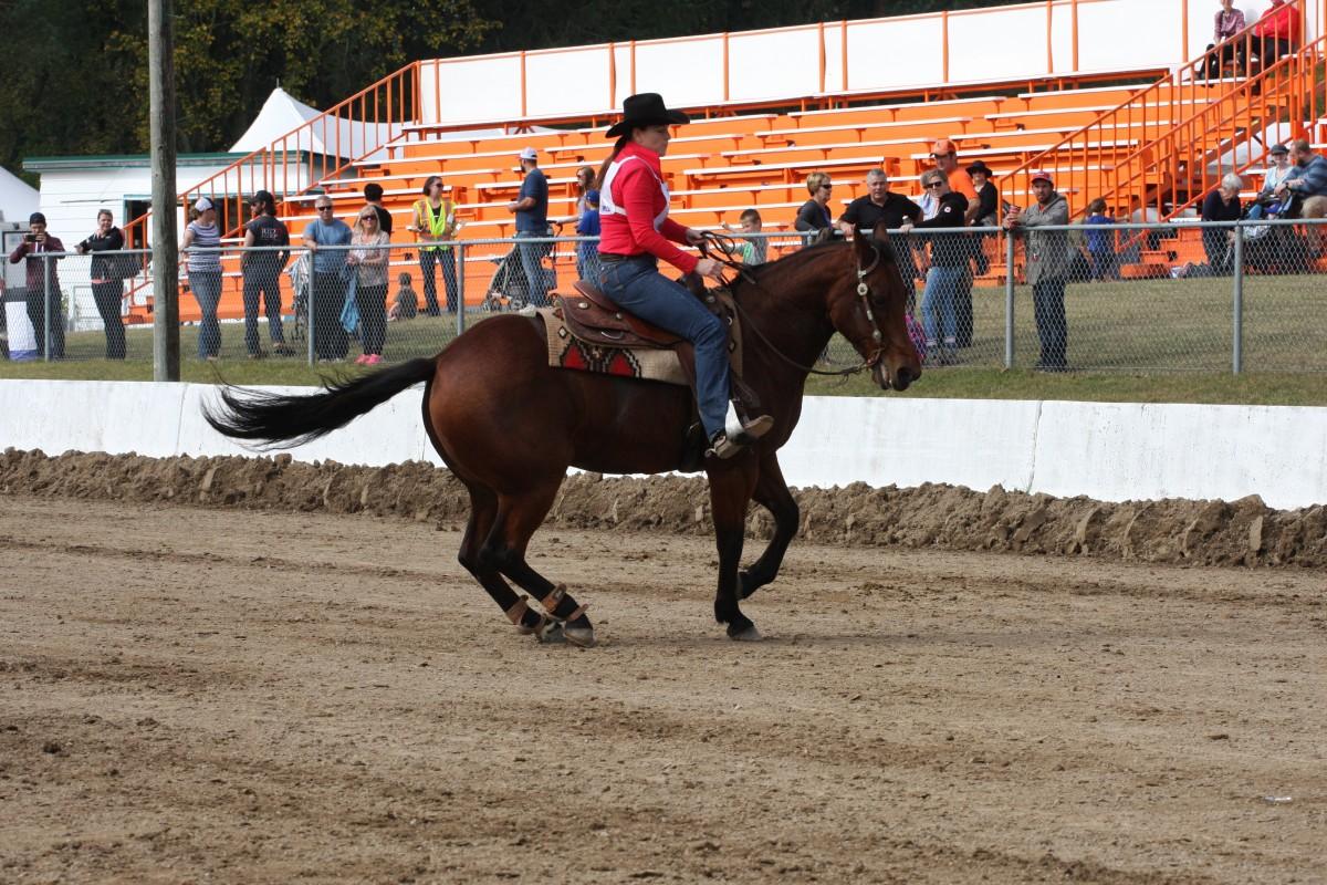 Reigning Quarter Horse